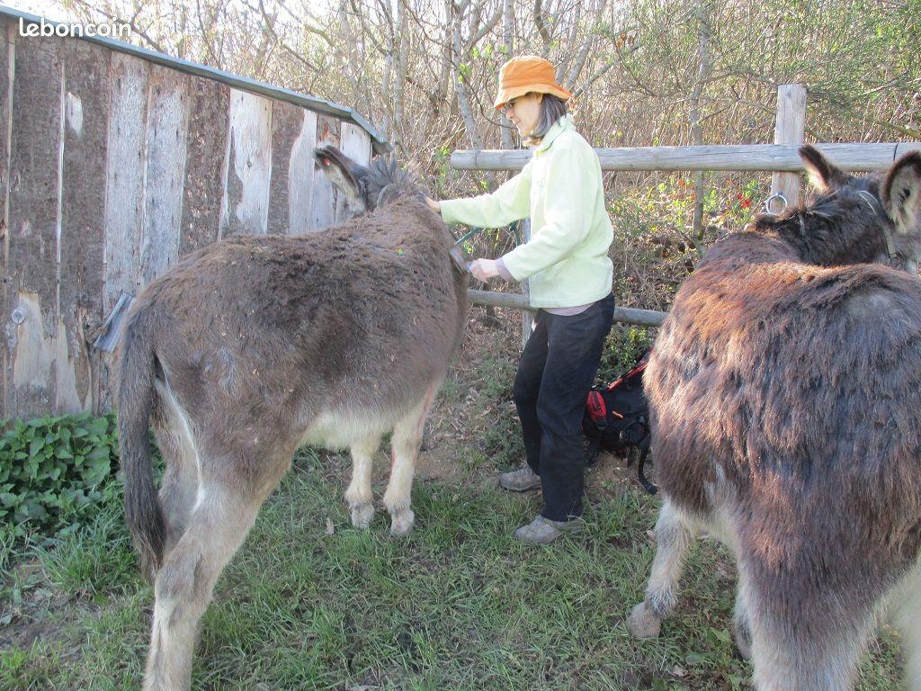 Personne s'occupant de deux ânes