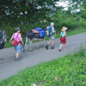 Promenade avec des âne droite