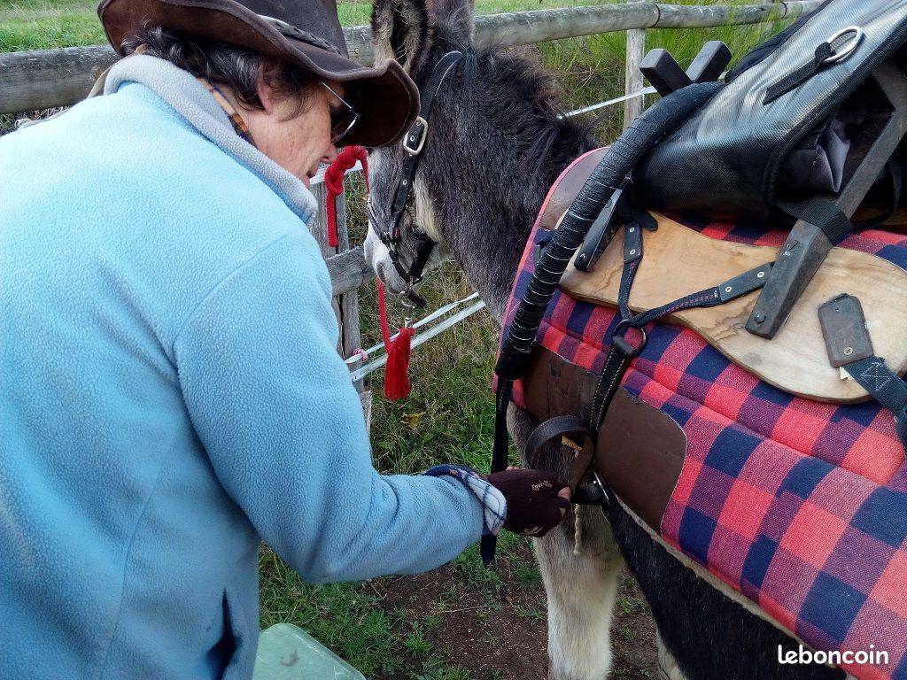 Pascale harnachant un âne