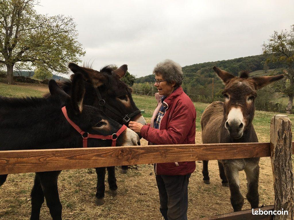 Pascale au milieu de ses ânes