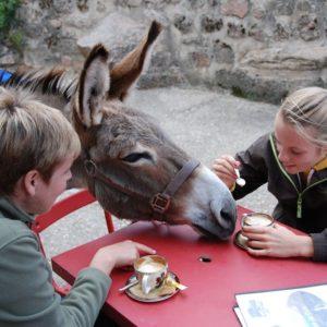 Âne qui vient manger avec des humains